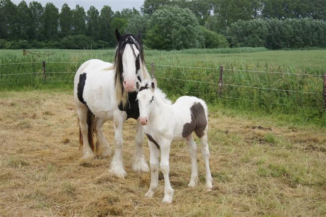 Colt born 29/5/2013. Black and white.